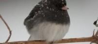 در فصل زمستان به پرندهها غذا ندهید!