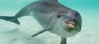 دلفین ناراضی دردسر ساز شد!!