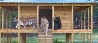 دوستی عجیب خرس و شیر و پلنگ