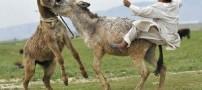 اعتراض به برگزاری مسابقه بسكتبال سوار برالاغ