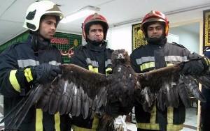 شکار عقابی بزرگ در یک ساختمان مسکونی در تهران