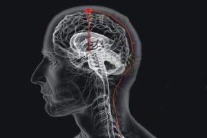 بیست واقعیت جالب درباره مغز