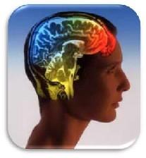 نحوه رمزگذاری خاطرات در مغز انسان کشف شد