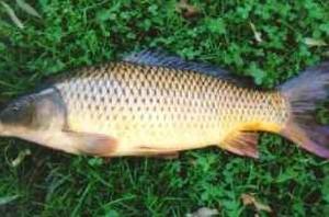 تخم ماهی ، منبع غنی امگا3