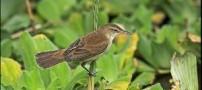 ناشناخته ترین پرنده جهان در افغانستان!!