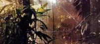 مرگ یک تایوانی بر اثر تماشای فیلم آواتار