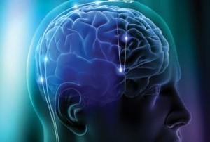 رابطه اندازه مغز و یادگیری