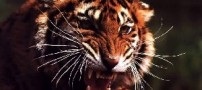 دانستنی هایی از دنیای حیوانات