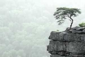 کشف درختی که خانم است !!!