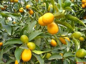 میوه چه درختی هستی؟