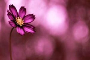 رایحه گل مورد علاقه شما چیست؟