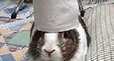 خرگوشی که پس از مرگش معروف شد!