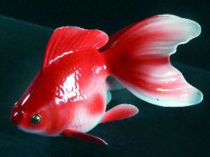 18 توصیه خرید و نگهداری ماهی قرمز