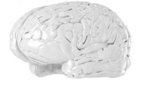 از چند درصد مغزمان استفاده می کنیم؟