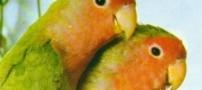 پرندههای ماده به جفتشان خیانت میکنند