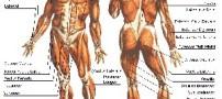 دانستنیهایی جالب درباره بدن انسان