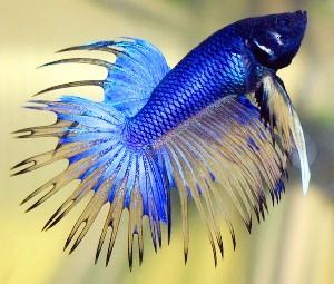 ماهیها از خودشان میترسند !!