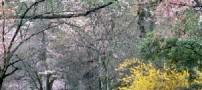 سارقان درختهای پارك را میدزدیدند