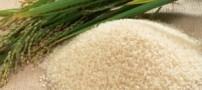 یارانه گندم، برنج، شیر و حملونقل ریلی و هوایی حذف میشود