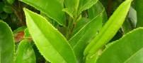 خواص انواع چای گیاهی