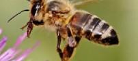زنبورها در هوای سرد نوشیدنی گرم می نوشند!