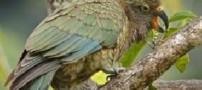 مهارت غجیب طوطی های نیوزلند