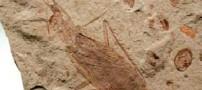 كشف فسیل 300 میلیون ساله سوسك