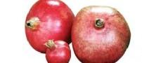 پیشگیری از سرطان با مصرف میوههای قرمز