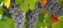 میوه ای که خستگی و ضعف بدن را برطرف میكند