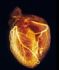 نحوه عملکرد قلب انسان چگونه است؟