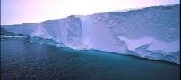 راز یخ نزدن ماهیان ساکن اقیانوسهای قطبی