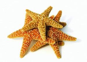 تولید برق از ستاره دریایی