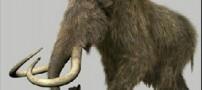 دلایل انقراض نسل ماموتها
