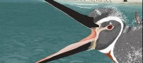 کشف فسیل پنگوئنی غول پیکر در کشور پرو