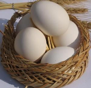 روز جهانی تخممرغ هم رسید !!