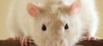 جریمه پیدا شدن موش در نان صبحانه!