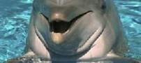کشف کلاس راه رفتن بر روی آب توسط دلفینها