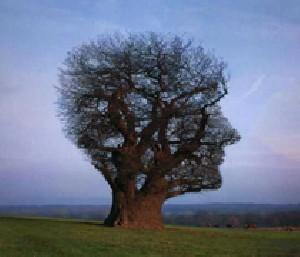 شخصیت شناسی و طالع بینی با درخت