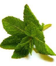 خواص درمانی گیاه نعناع