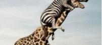 لیست عجیبترین حیوانات جهان!