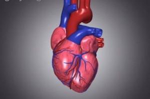 غذاهایی برای حفظ سلامتی قلب