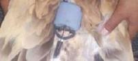 پرنده جاسوس در عربستان پیدا شد!!