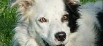 باهوش ترین سگ جهان که دانشمندان را متعجب کرده