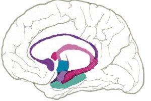 چند برابر کردن عملکرد مغز با مصرف این میوه