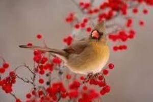 تاثیر دیدن گل بر هورمون جنسی پرندگان نر!