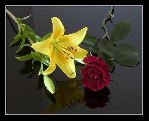 چطور گل های طبیعی را خشک کنیم؟