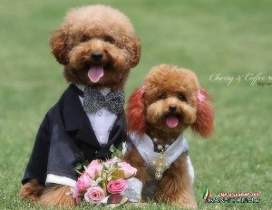 شرط جالب عروس خانم برای داماد ملی پوش !!
