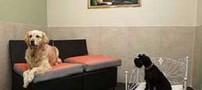 افتتاح باور نکردنی هتلی برای سگ ها در فرانسه