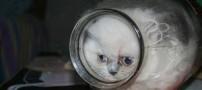 زندگی باور نکردنی یک گربه در شیشه مربا