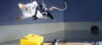 سرقت بسیار جالب به سبك موشها !